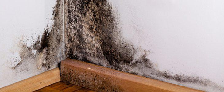 Que faire contre la moisissure dans un logement ?