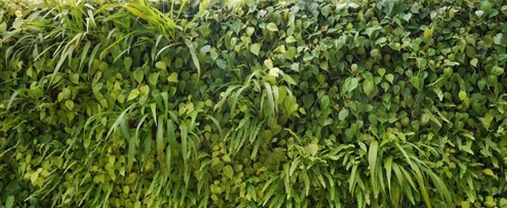 Tout savoir sur le mur végétal d'extérieur
